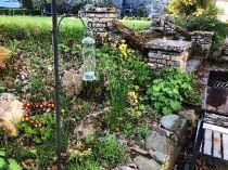 Alpine garden - 16052018