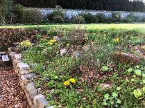 Alpine garden 2 - 16052018