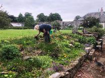 Alpine garden weeding - 31052018