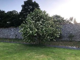 Apple blossom 1 - 27062018