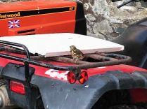 Bird on quad 2 - 23052018