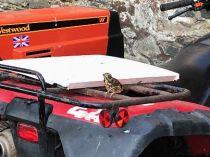 Bird on quad - 23052018