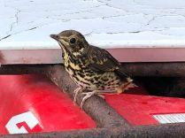 Bird on quad 3 - 23052018