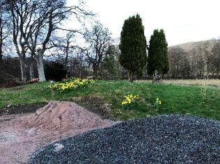 Daffodils 1 - 25042018