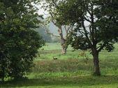Deer in field - 01062018
