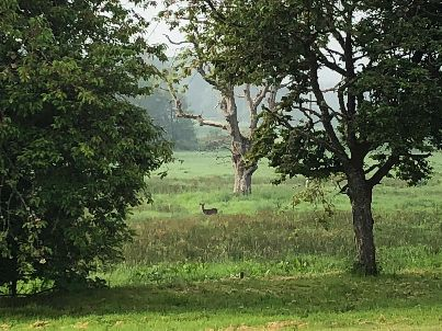 Deer in field 2 - 01062018