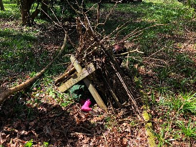 Dens in the woods 5 - 05052018