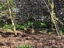 Ducklings 5 - 06052018