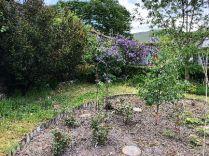 Flower garden - 26052018