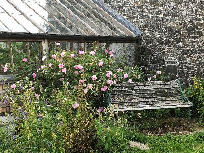 Flower garden roses 3 - 27062018