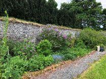 Herb border 1 - 26052018