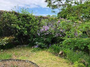 Lilac in flower garden 2 - 26052018