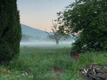 Mist in the valley - 3 - 09062018