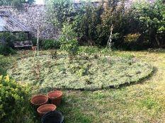 Mulch on rose garden - 26052018