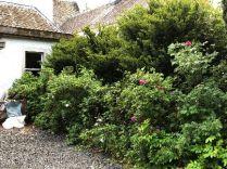 Rose garden - 01062018