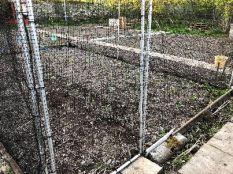 SWG caged seedlings - 16052018