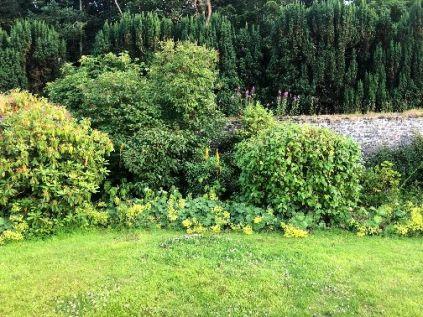 Herb border 2 - 17072018