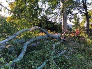 Storm damage 8 - 20092018