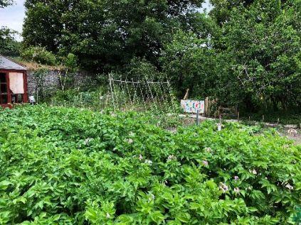 SWG - Veg garden 1 - 04072018