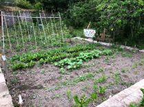 SWG - Veg garden 2 - 04072018