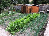 SWG - Veg garden 3 - 04072018