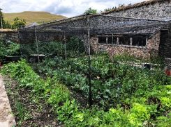 SWG - Veg garden 4 - 04072018