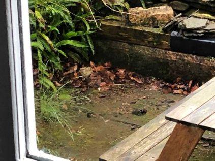 Baby pheasants 6 - 05062019