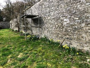 Daffs replanted - 30032019