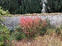 Flowering currant - 30032019