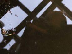 Newts 2 - 01062019