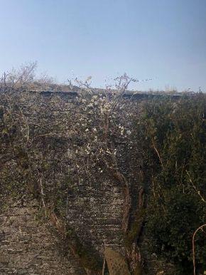 Plum blossom - 17042019