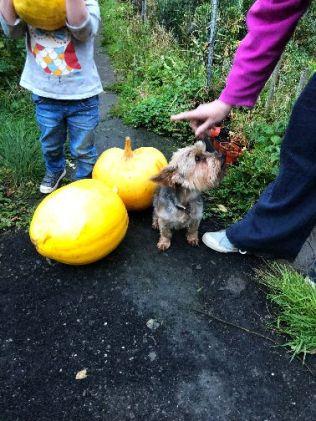 Pumpkins 3 - 11102018