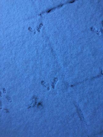 Snow 5 - 02022019
