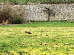 Squirrel on lawn 1 - 24032019