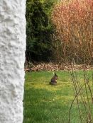 Squirrel on lawn 3 - 30032019