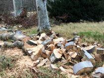 Timber processing 2 - 15112018