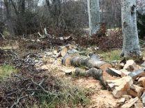 Timber processing 3 - 15112018