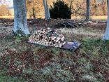 Timber processing 3 - 18112018