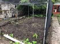 Veg cage - 30052019
