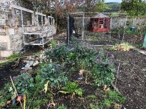 Veg garden - 27042019