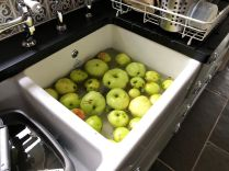 Apples - 26092019