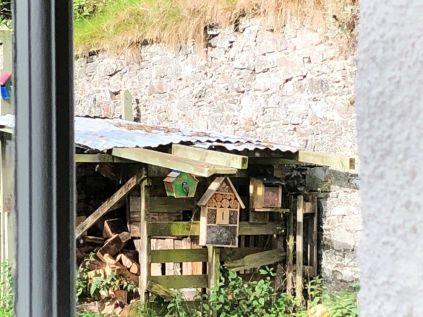 Bird boxes - 29082019