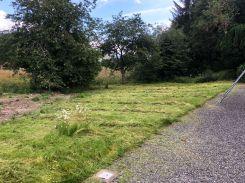Hay at front - 15072019