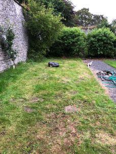 Noah on back lawn - 30072019