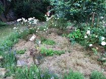 Rose garden - 03082019