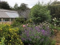 Rose garden - 08082019