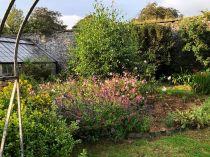 Rose garden - 27082019