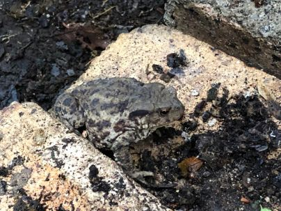 Toad 2 - 22082019