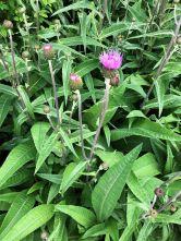 herb border - 20062020
