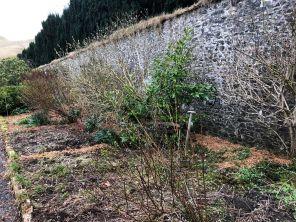 Herb border 4 - 29032020